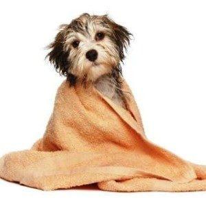 Kann ich meinem Hund mit normalem Shampoo waschen?