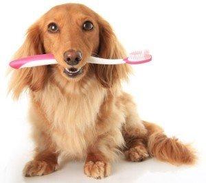 Kann ich meinem Hund die Zähne putzen?