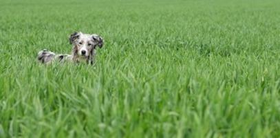 Kann ich meinen Hund Gras fressen lassen?