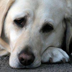 Kann Ich meinem Hund etwas gegen Magenverstimmung geben ?