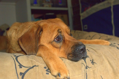 Kann ich meinen Hund alleine lassen?