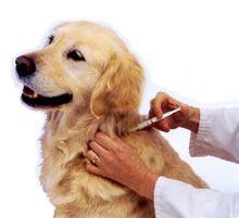 Kann ich meinem Hund eine Impfung zu Hause geben?